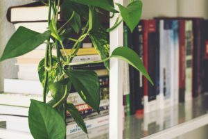 5 plants that can easily grow indoors